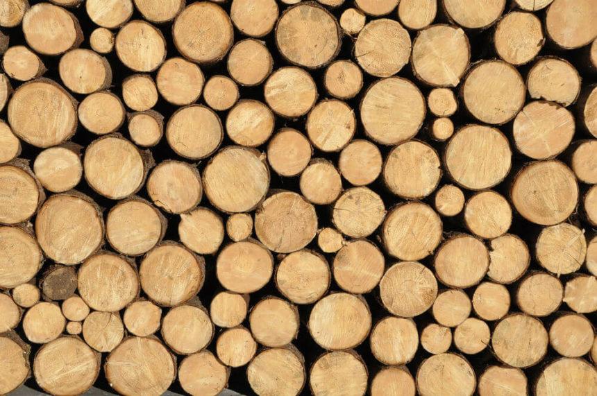Vidéo bois et béton : l'aspiration du début d'année